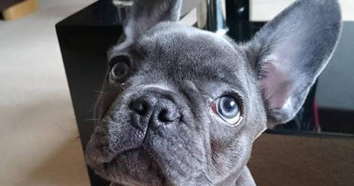 Ljubav i odanost Pas uginuo 15 minuta nakon što je njegov vlasnik izgubio bitku s rakom!