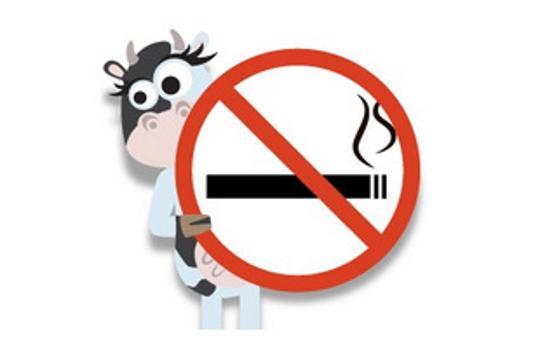 Koks pušenje