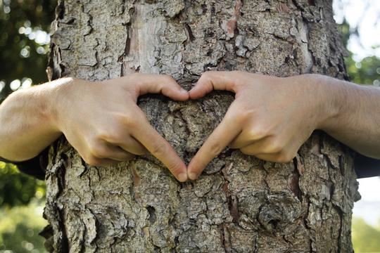 brzina sadnje stabala Kupid besplatno druženje