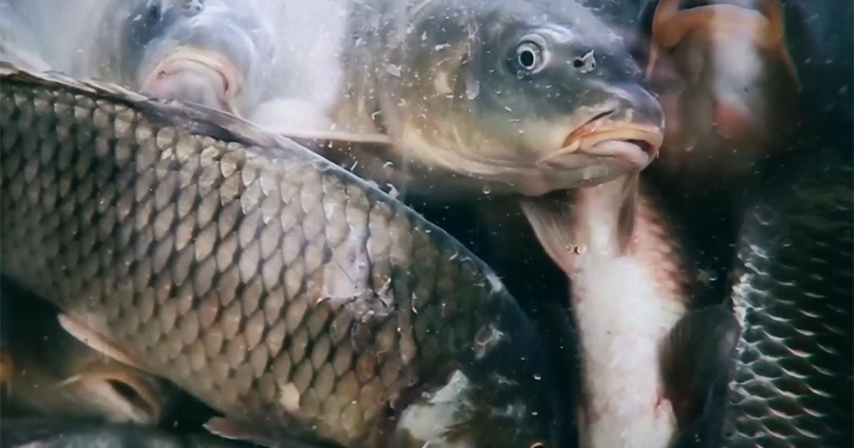 gnušanje kupaca zbog neetičnih postupanja patnja i smrt tisuća živih riba, rakova i mekušaca u trgovinama prijatelji životinja ponovo apeliraju trgovačkim lancima da prestanu sa praksom prodaje živih riba, rakova, školjkaša i drugih mekušaca u supermarketima. navode da takvom neetičnom, ...