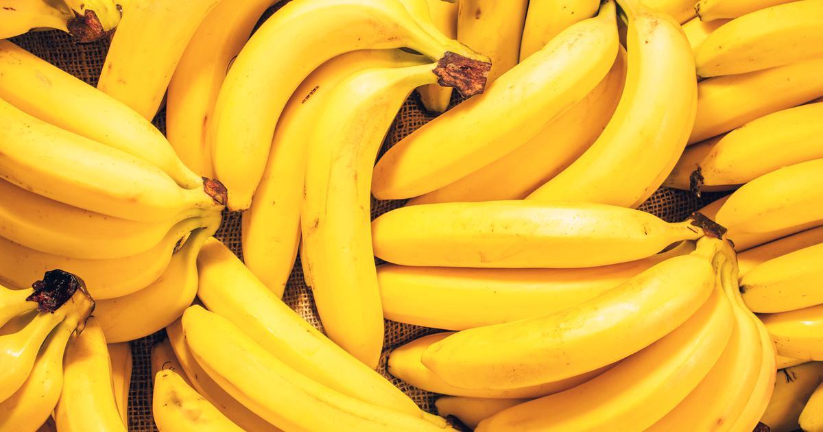 Krivac je patogena gljiva Bananama prijeti izumiranje, Kolumbija proglasila izvanredno stanje! Banane su velikom broju ljudi omiljeno voće, a uz to su jako hranjive, zdrave i ne možemo zamisliti Smoothieje bez njih. No, nažalost prijeti ...