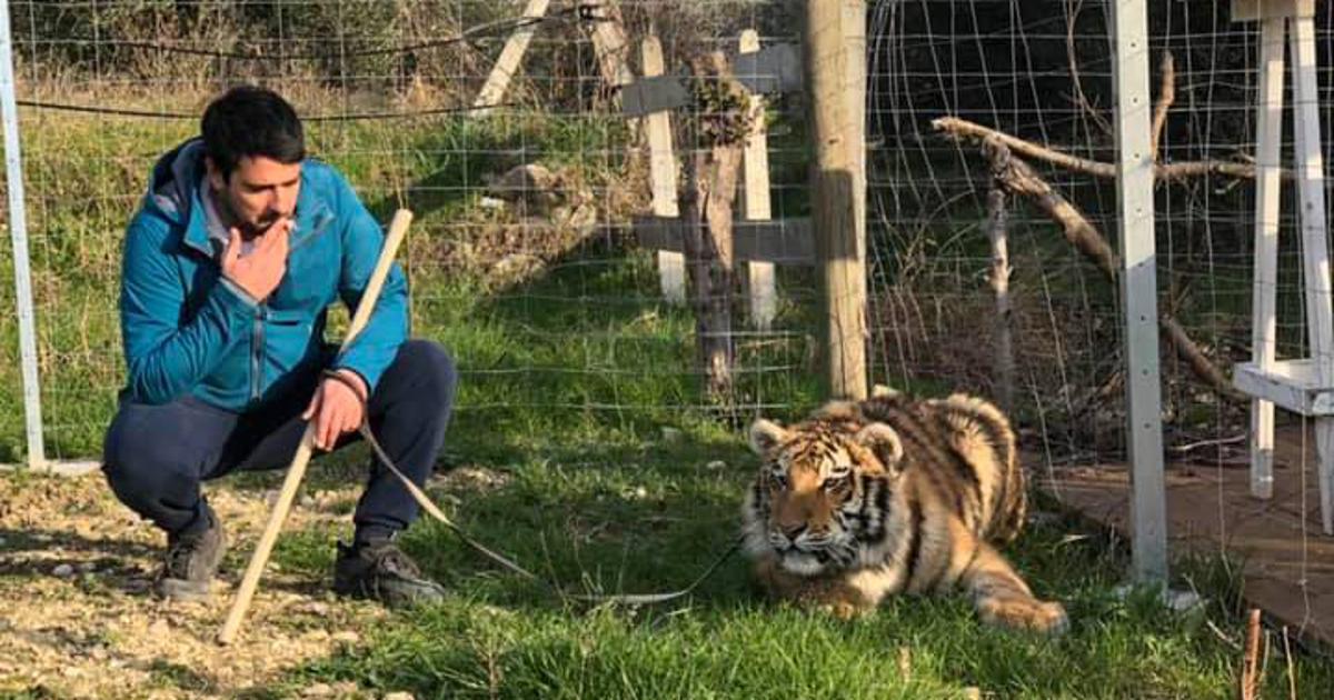 reagirali su prijatelji životinja i wwf auschwitz od farme : tigar s trajekta nije jedina ugrožena životinja